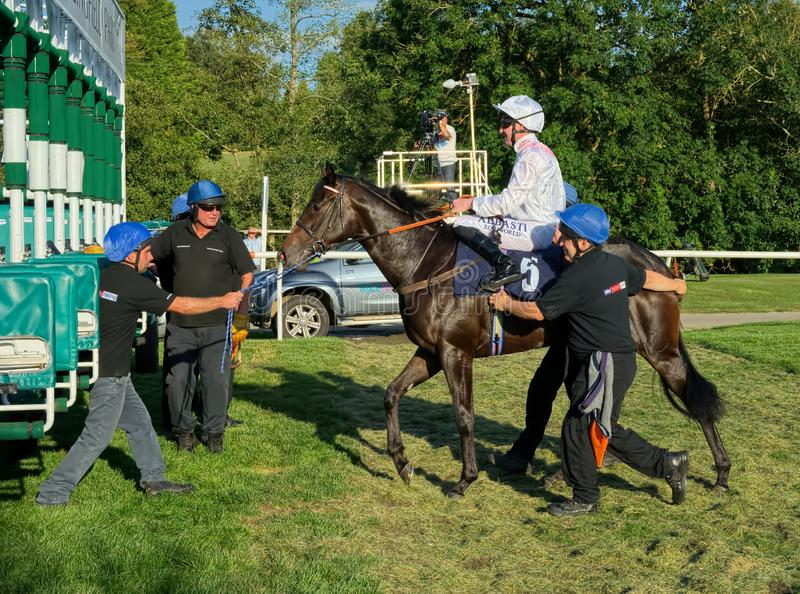 Pat Cosgrave, horse racing jockey. Entering the stalls. Pat Cosgrave is a horse racing jockey. Here on Microscopic as the handlers help get the horse into the stock photos
