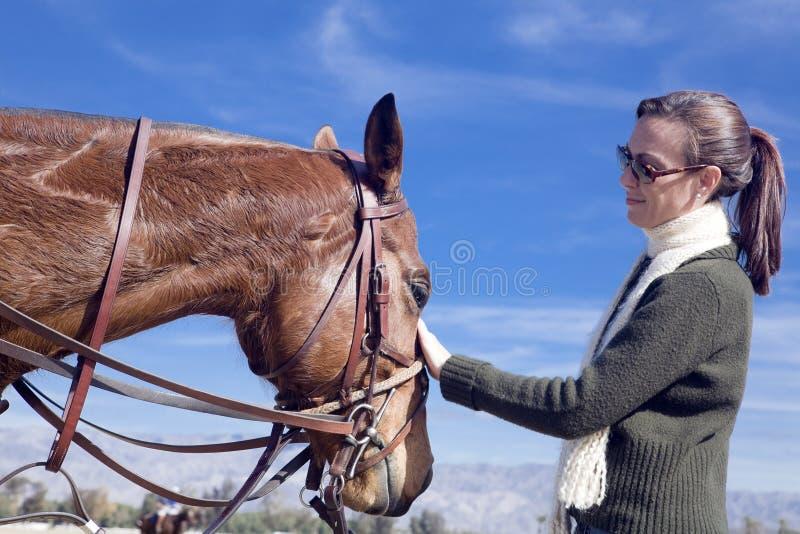 pat koń. obraz royalty free