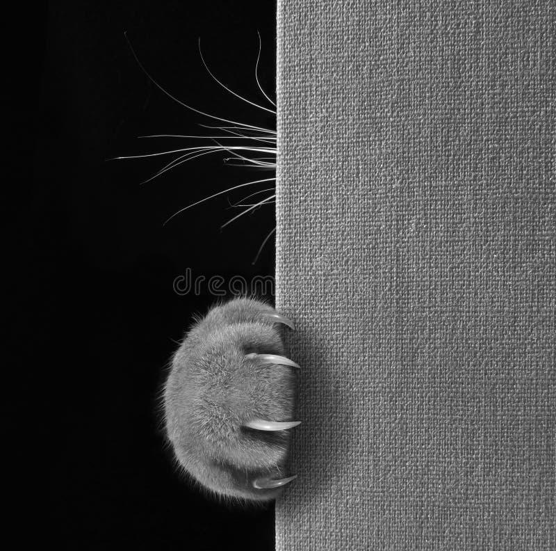 Pata del ` s del gato con las barbas en un libro imagen de archivo