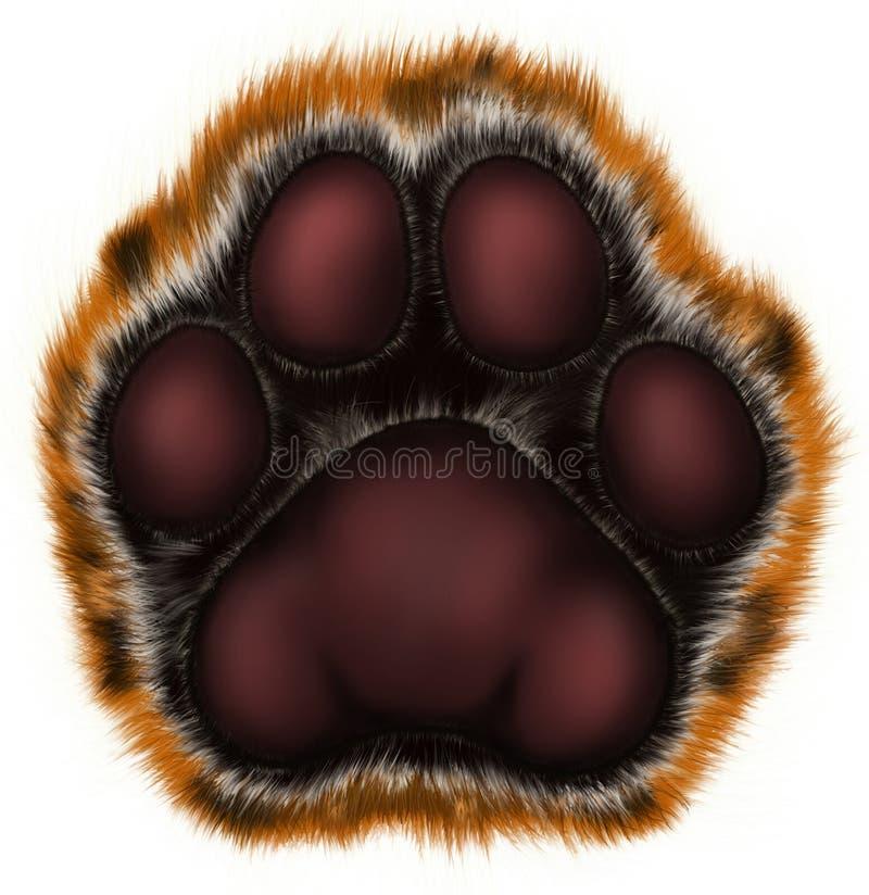 Pata del tigre en el fondo blanco imagenes de archivo