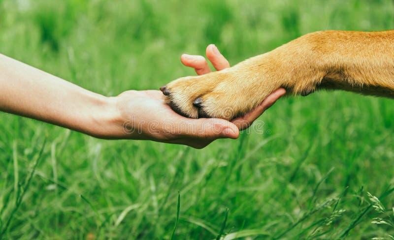 A pata do cão e a mão humana estão fazendo o aperto de mão imagem de stock royalty free