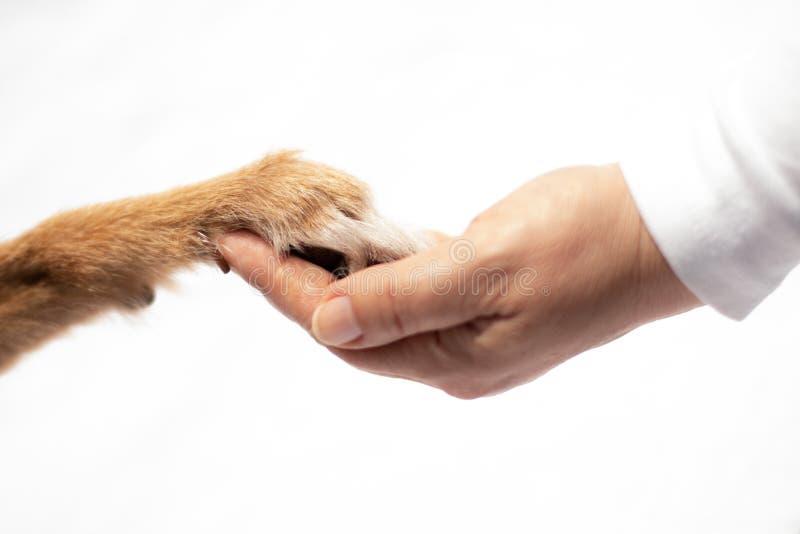 A pata do cão toca na mão humana imagem de stock royalty free