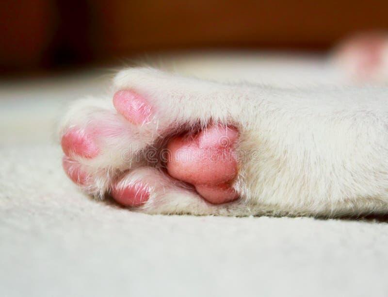 Pata do gato do sono imagens de stock royalty free