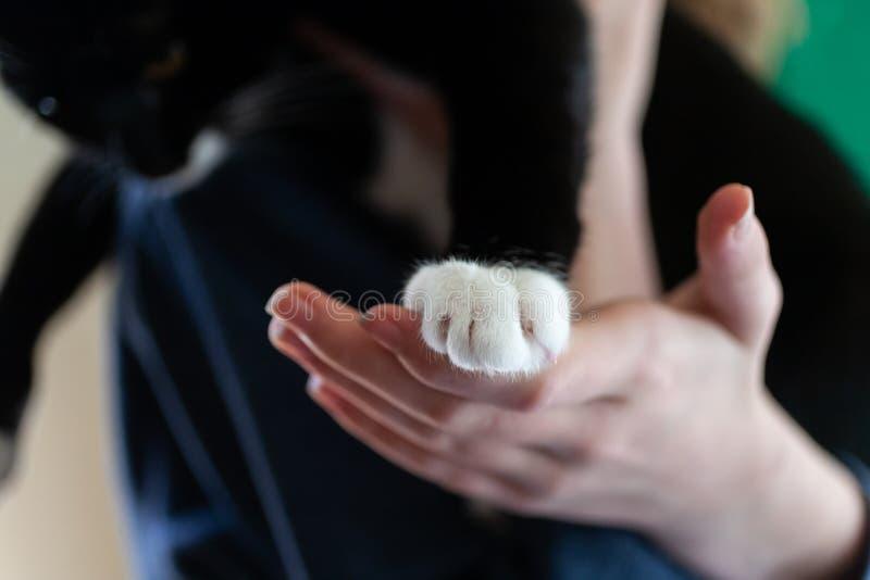 Pata do gato na mão humana fotografia de stock royalty free