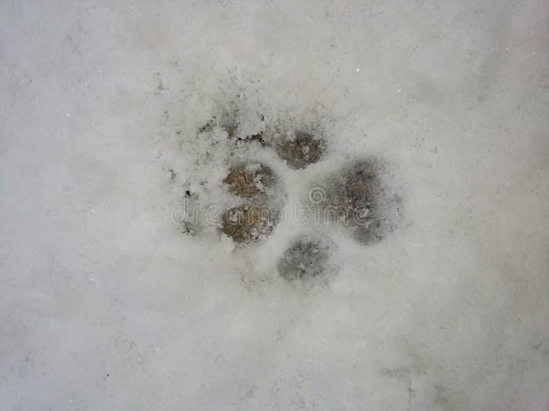 Pata en nieve imágenes de archivo libres de regalías