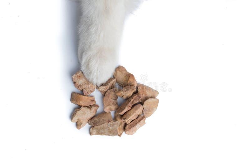 Pata linda de Husky Dog del siberiano con la invitación del perro foto de archivo