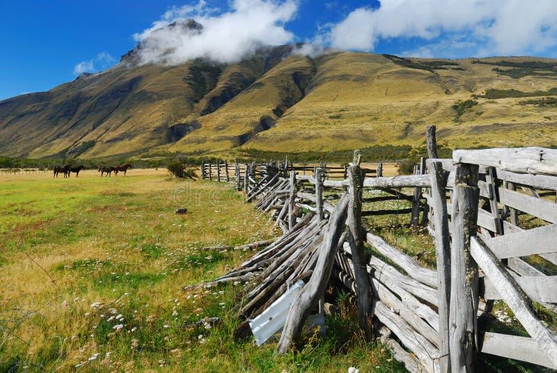 patagonia лошади строба стоковые изображения rf