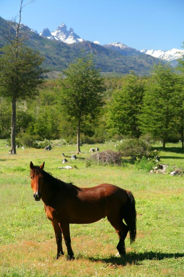 patagonia лошади стоковые фотографии rf