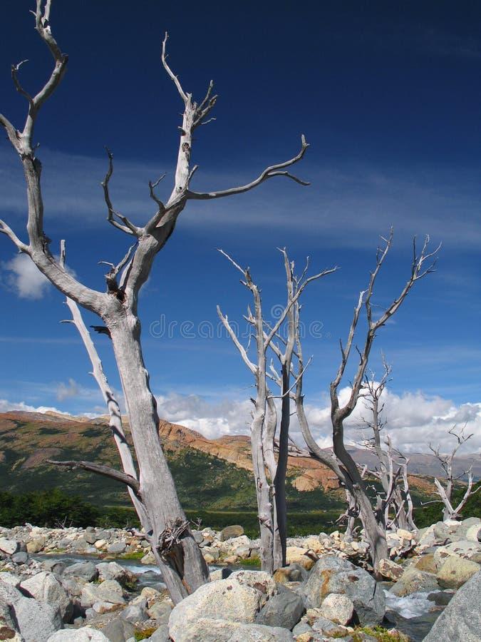 patagonia стоковые фотографии rf