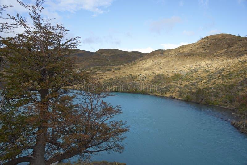 patagonia för park för paine för norte för nido för ndor för central chile de del montering för c maximal nationell synliga surto royaltyfri bild