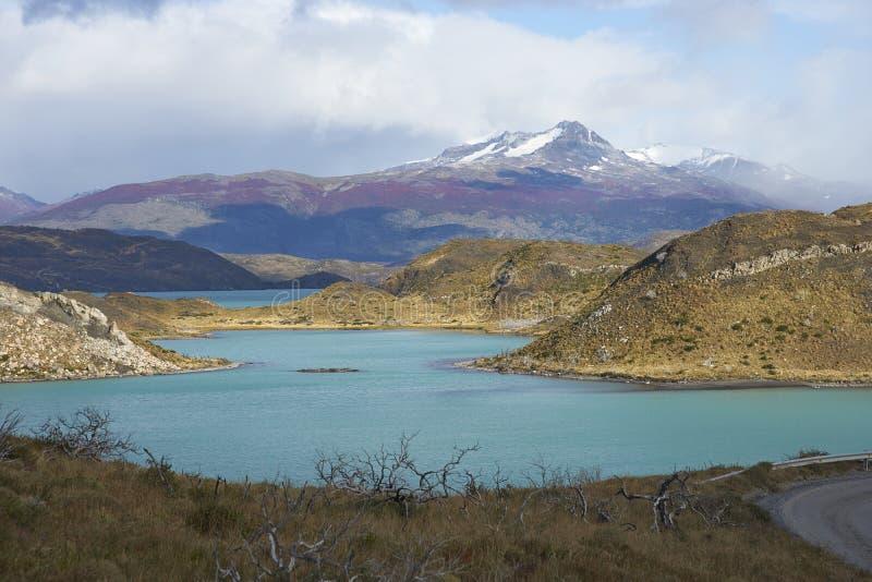 patagonia för park för paine för norte för nido för ndor för central chile de del montering för c maximal nationell synliga surto fotografering för bildbyråer