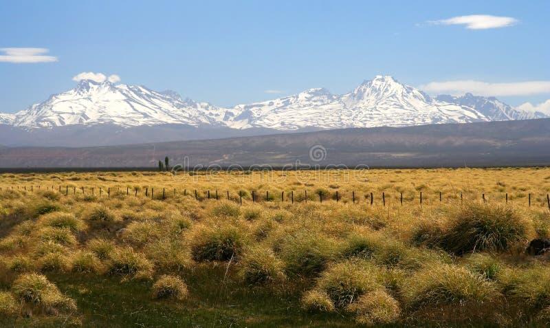 Patagonian grassland stock photography