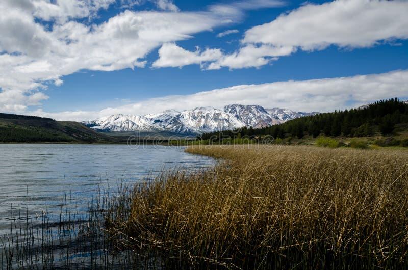 Patagonian landskap av sjön med snöig berg och skogen arkivfoton