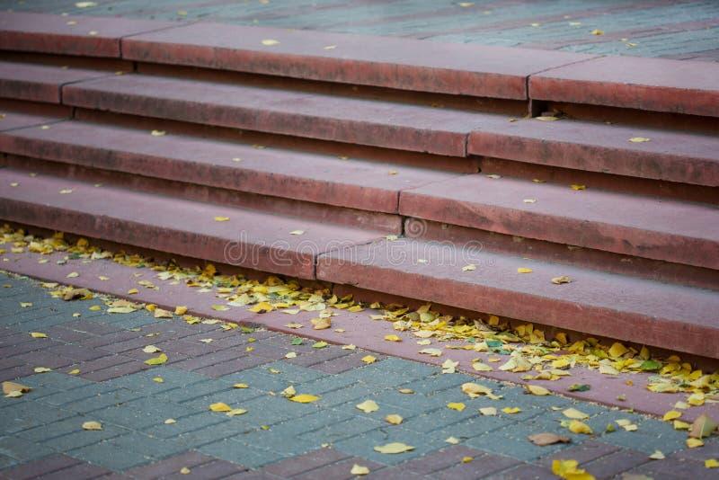 Patamar vazio da escola coberta nas folhas de outono amarelas foto de stock royalty free