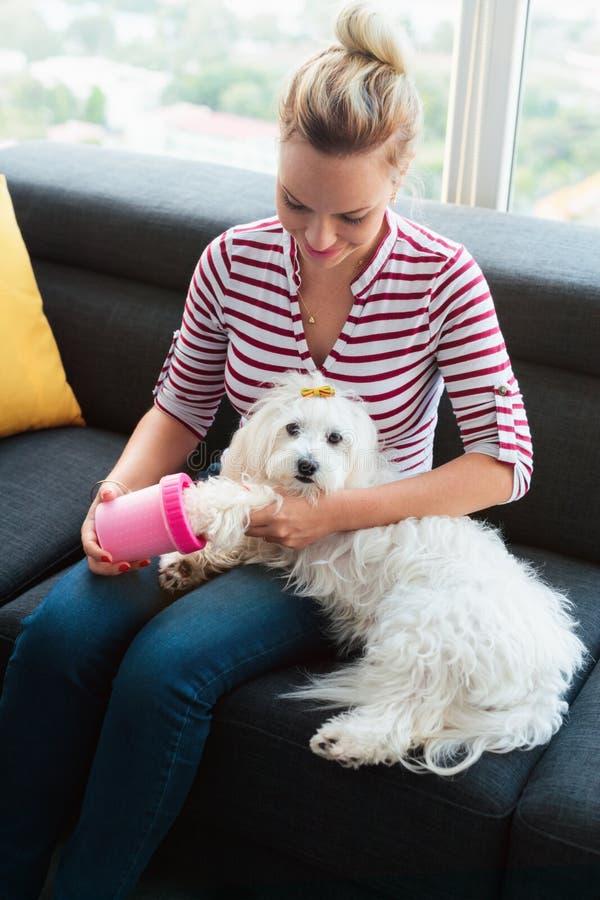 Patas de la limpieza del dueño del perro al pequeño animal doméstico en casa fotos de archivo