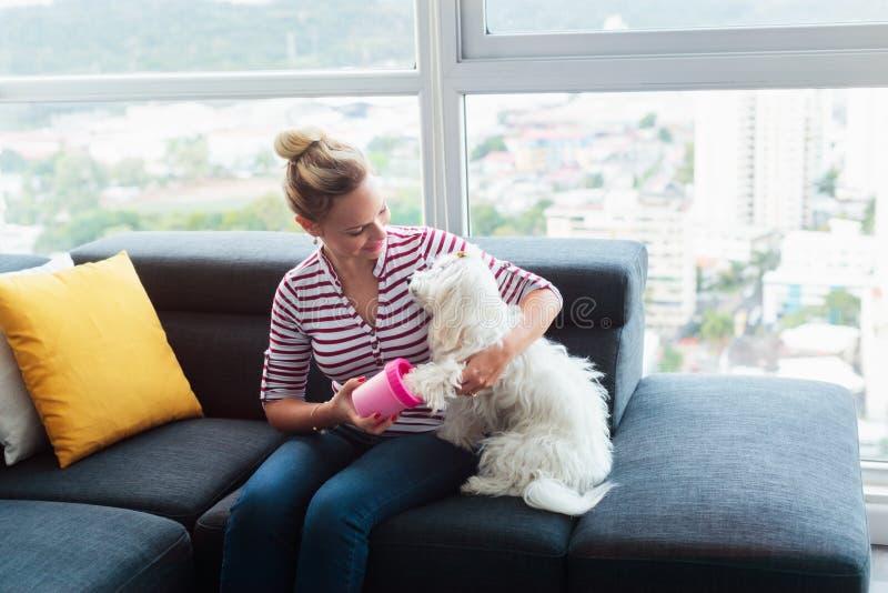 Patas de la limpieza del dueño del perro al pequeño animal doméstico en casa imagenes de archivo