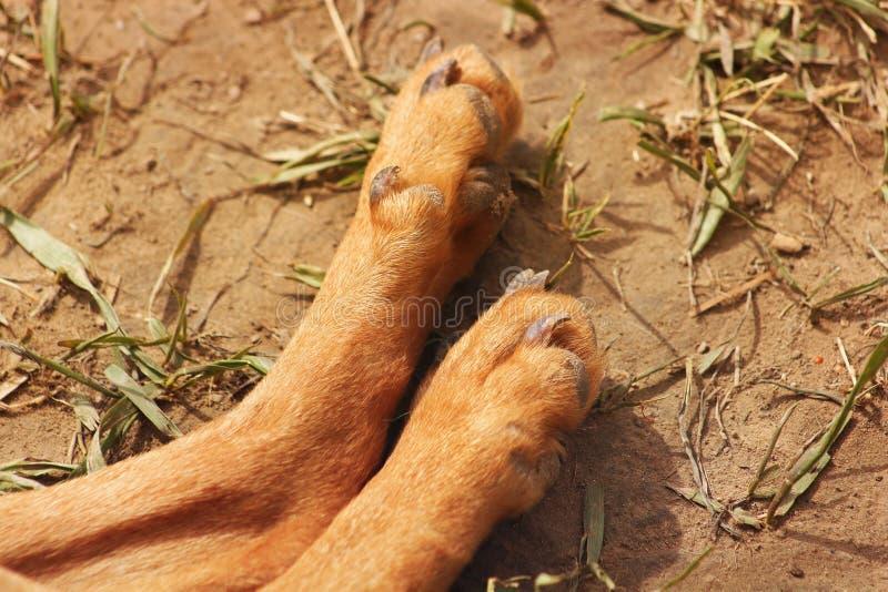 Patas de un perro en el cierre de la calle para arriba fotos de archivo