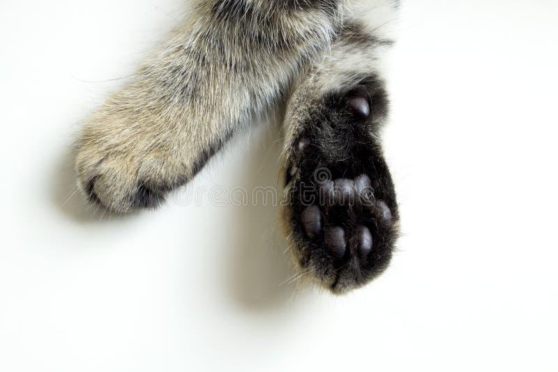 patas del gato aisladas en el fondo blanco imágenes de archivo libres de regalías