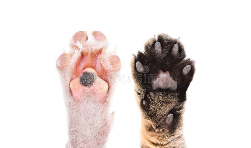 Patas del gato y del perro junto imágenes de archivo libres de regalías