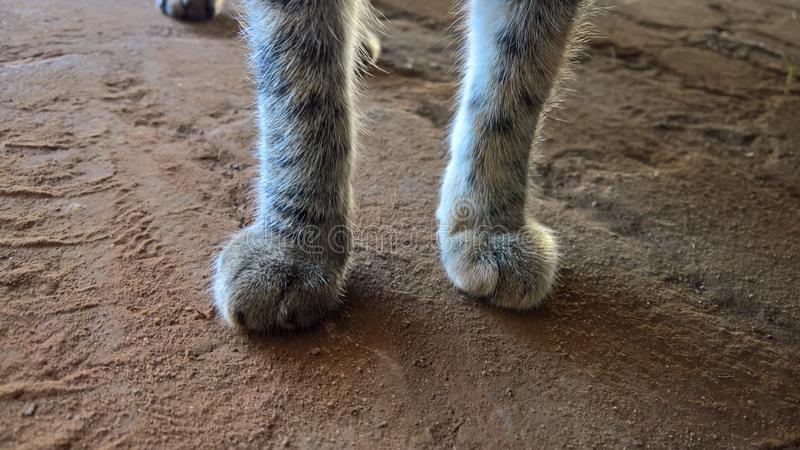 Patas do gato foto de stock royalty free