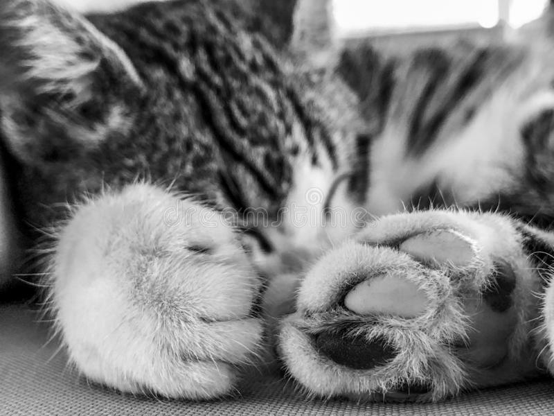 Patas do gato do gatinho foto de stock