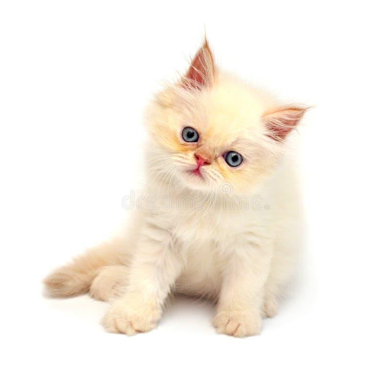 Patas juguetonas hermosas poner crema del gatito aisladas en el fondo blanco fotos de archivo libres de regalías