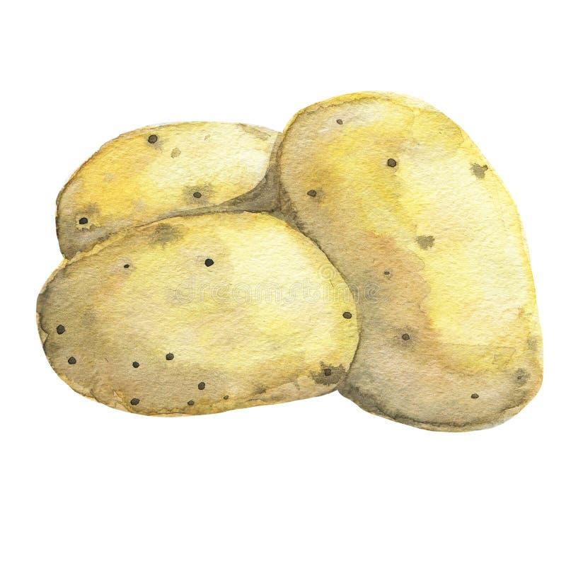 Patata Acuarela dibujada mano imagen de archivo