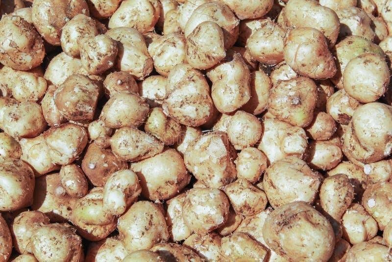Patata dulce blanca foto de archivo