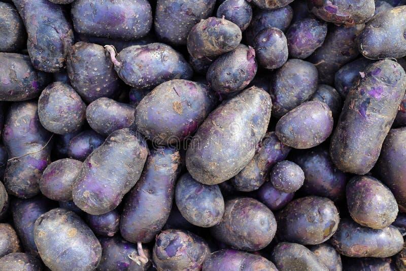 Patata púrpura foto de archivo