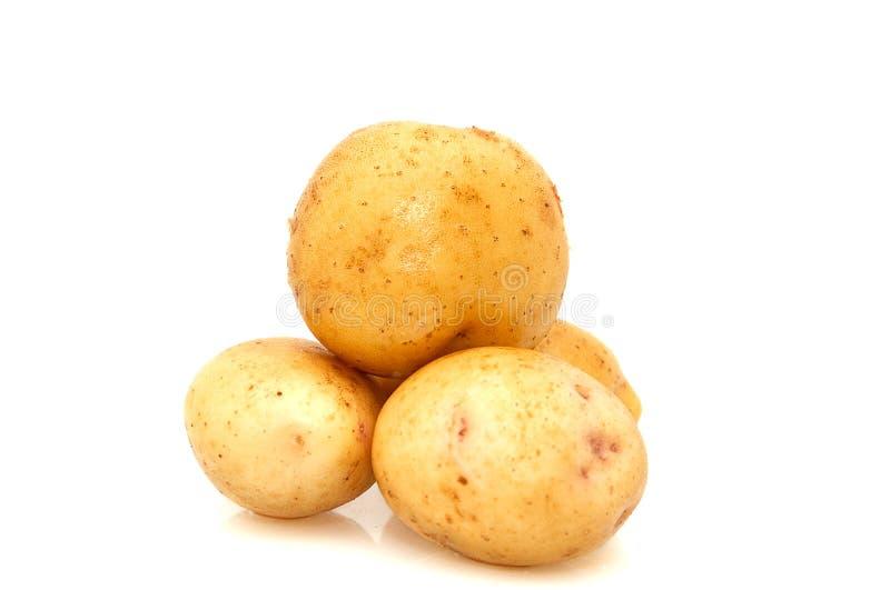 Patatas aisladas en un backgroundnd blanco. imagen de archivo libre de regalías
