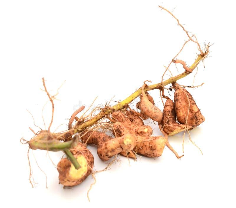 Patatas dulces orgánicas imagenes de archivo