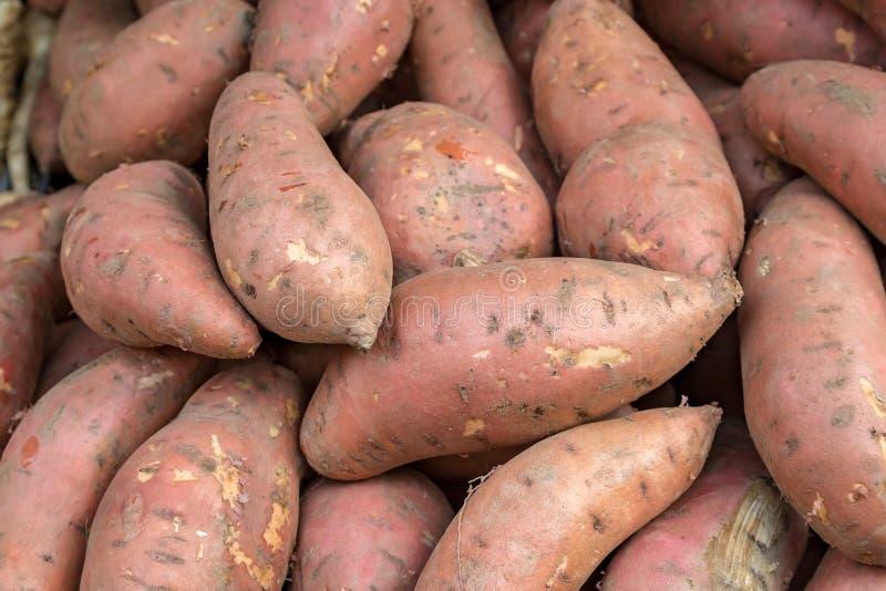 Patatas dulces org?nicas imágenes de archivo libres de regalías