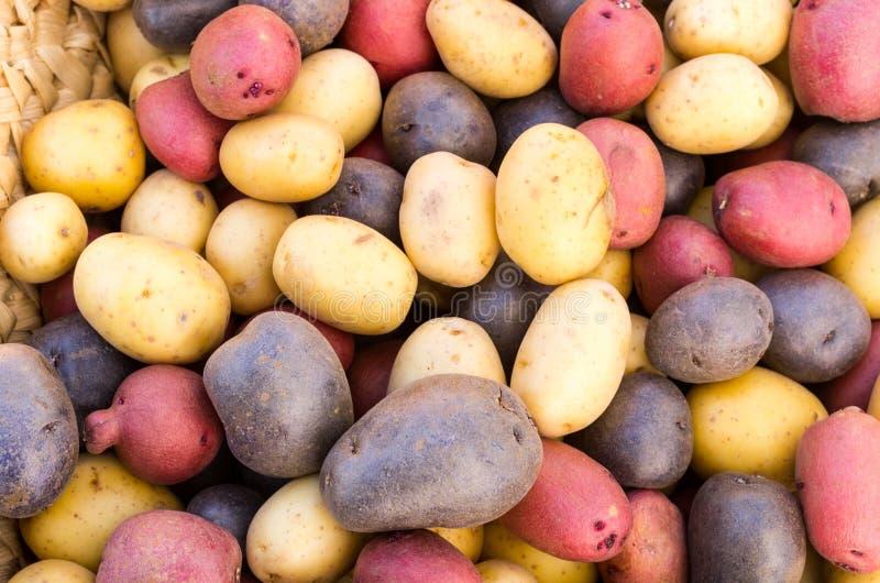 Patatas frescas coloridas en la visualización imagen de archivo