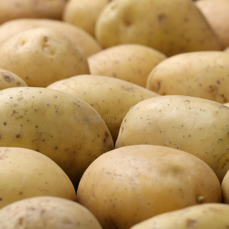 Patatas recién cosechadas imagen de archivo