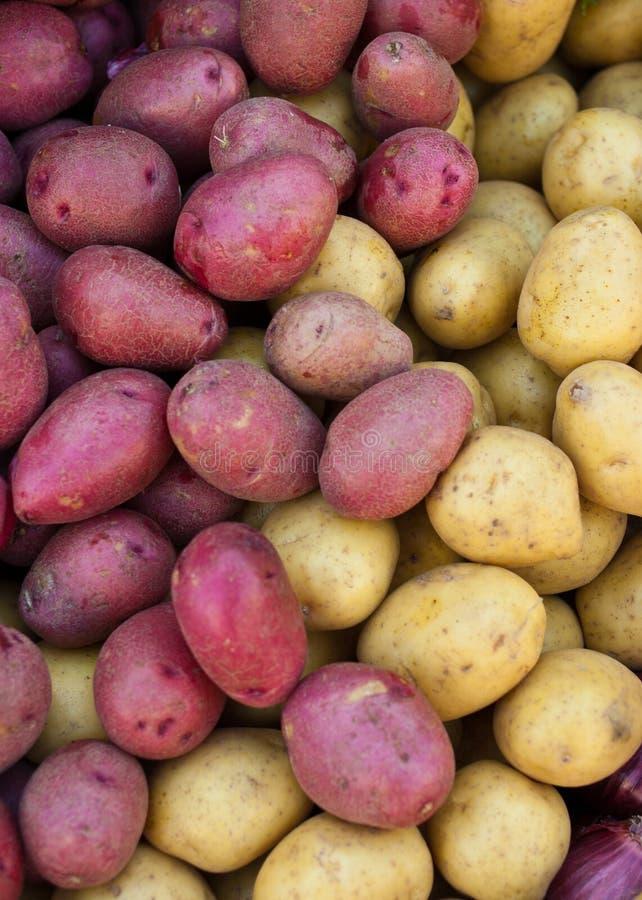 Patatas rojas y amarillas orgánicas imágenes de archivo libres de regalías