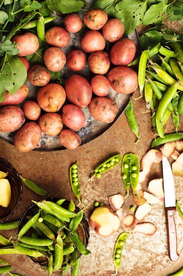 Patate di recente scavate da un giardino tavola del metallo con le patate Chiuda sul colpo di un canestro con i potatos raccolti fotografia stock