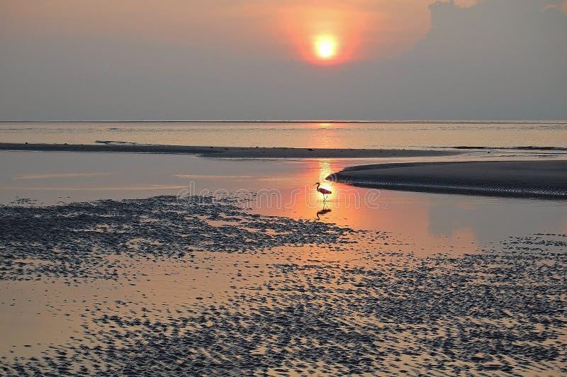 Patauger l'oiseau de rivage avec la réflexion d'océan images stock