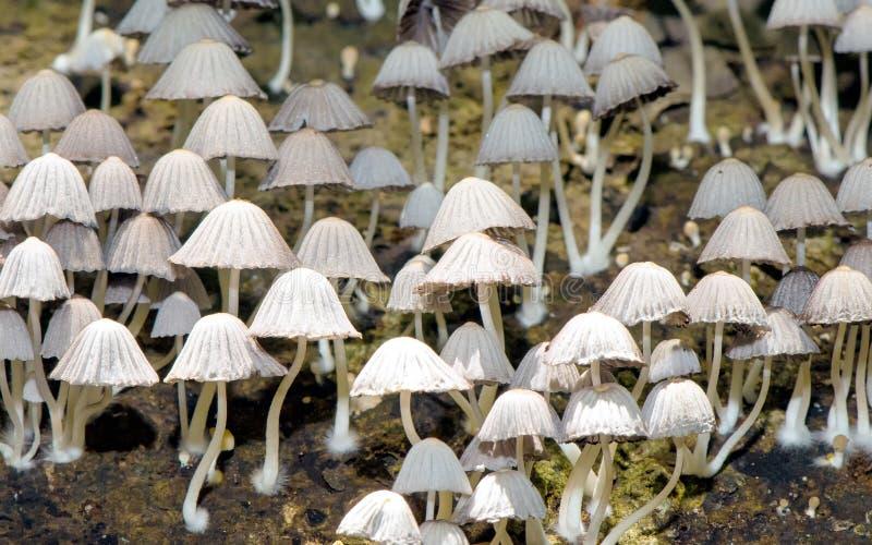 Patch of mushrooms stock photos