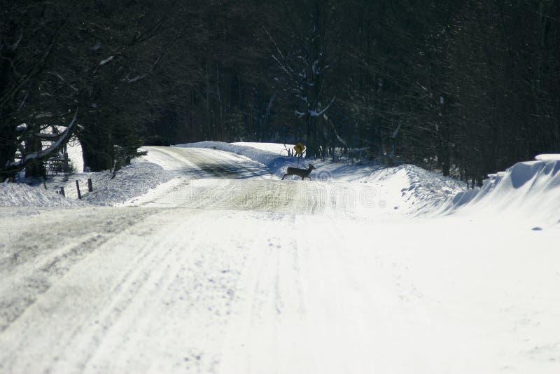 patches road zdjęcia stock
