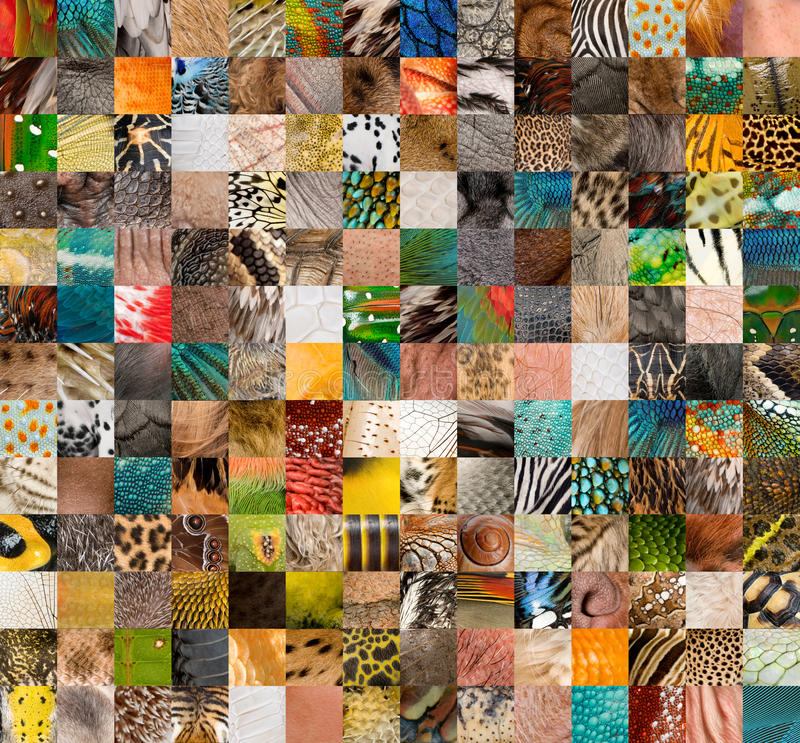 Patchwork of 196 skins. Patchwork of 196 animals and human skin