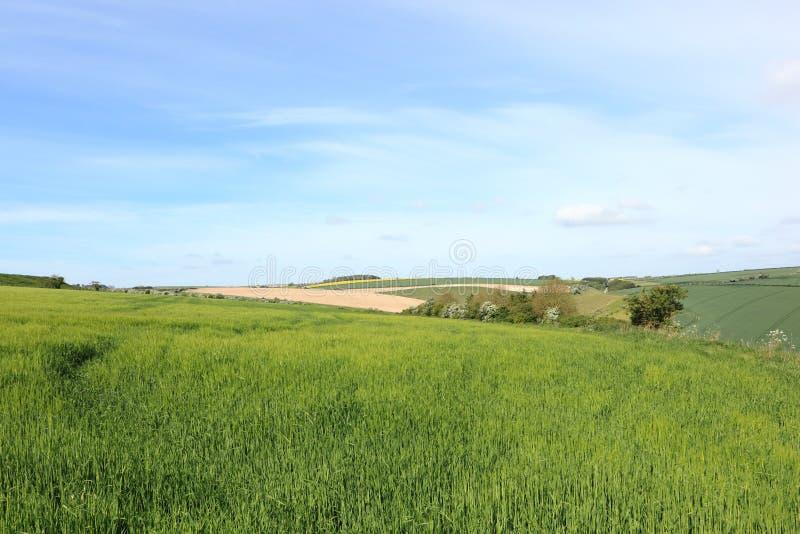 Patchworkfält med gröna skördar och att blomma för korn hagtornhäckar i vår arkivfoton