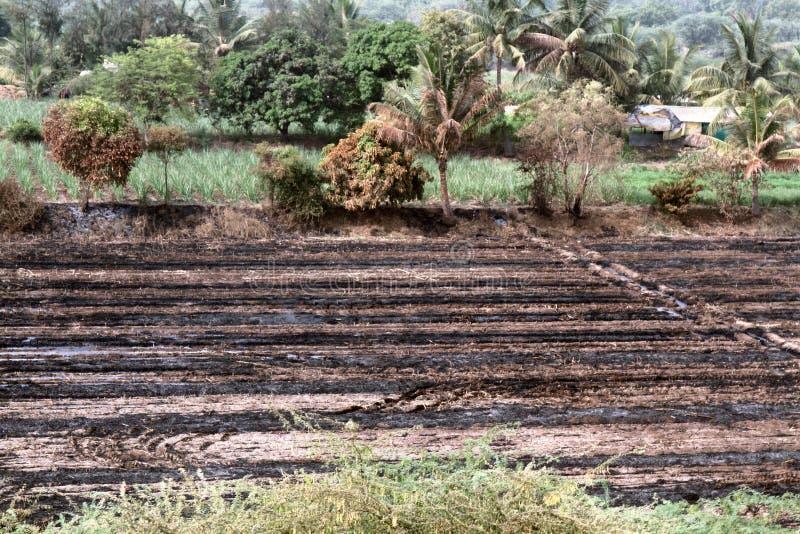 Patchworklandwirtschaft in Indien für Jahrhunderte stockbilder