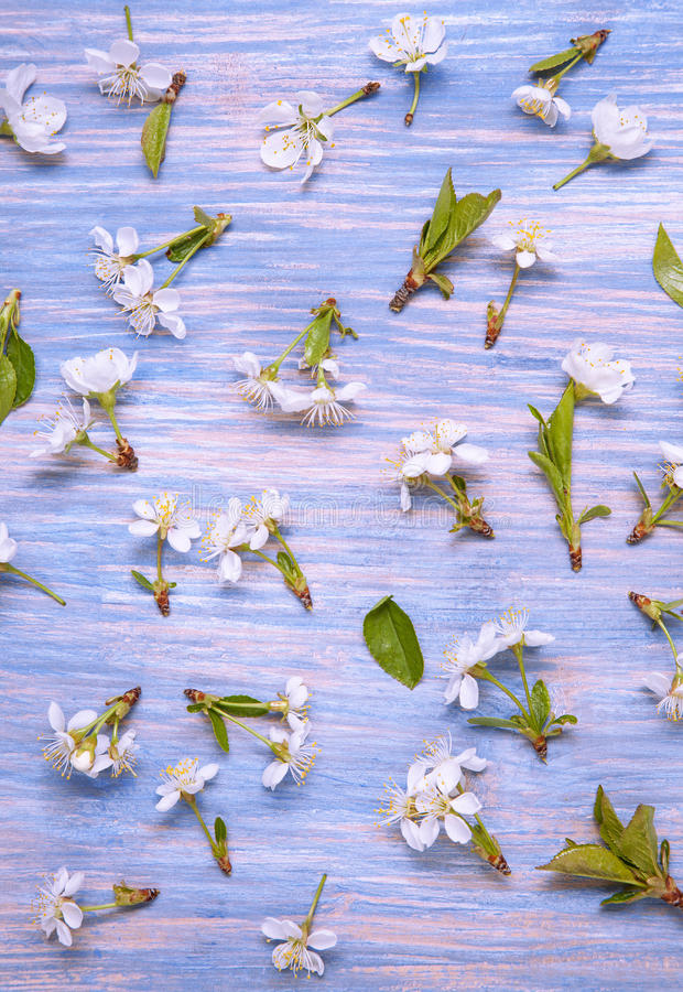 Patern Texture of Spring Flowers on the background of an old vintage blue board.  stock images