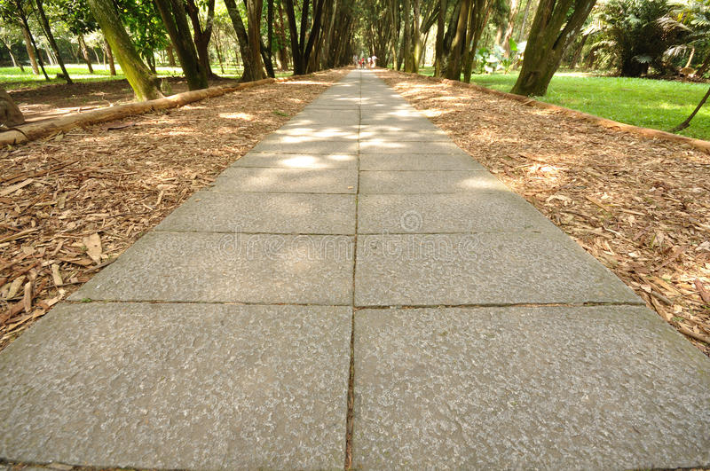 Download A path stock photo. Image of forest, woody, hike, green - 25249056
