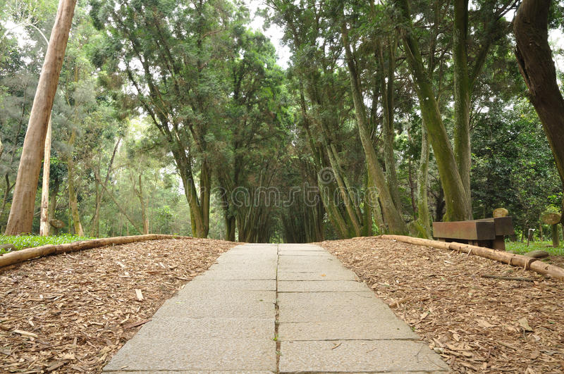 Download A path stock image. Image of hike, hiking, path, wood - 25249057