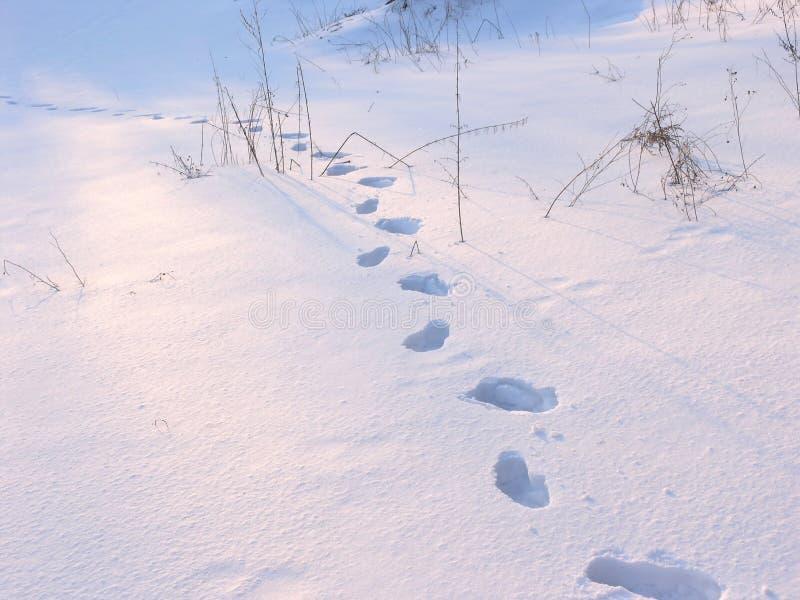 Download Path stock image. Image of path, human, feet, pattern - 4139893