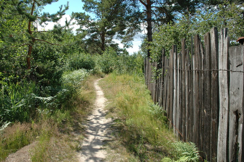 Path. And wood fence in pine forest stock image
