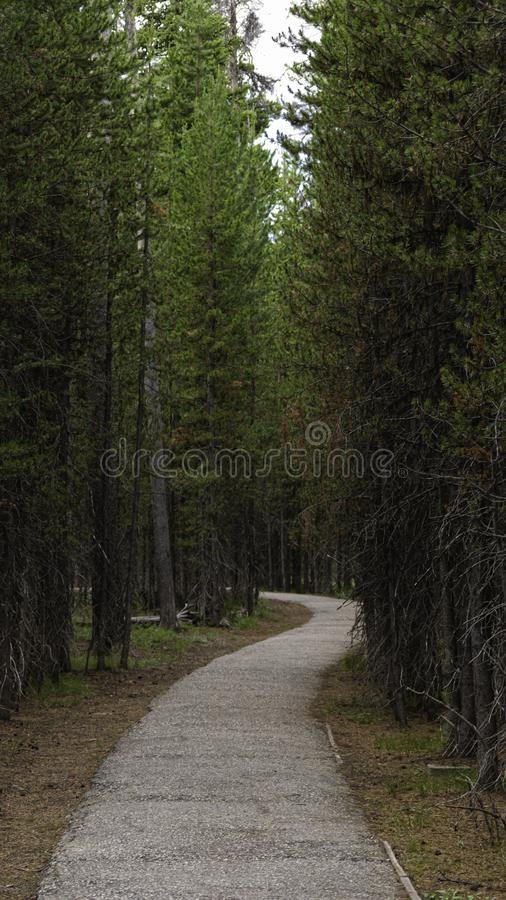 The Path Ahead royalty free stock photo
