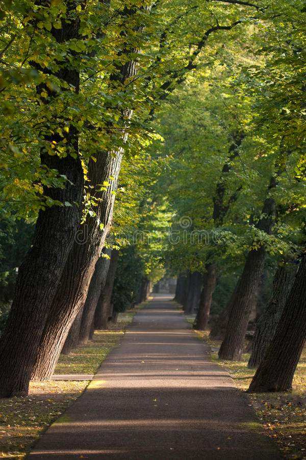 Download Path Between Alley Of Sloping Trees Stock Image - Image: 11554727