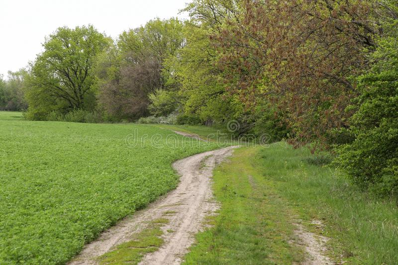 The path along the field leading to the forest, horizontal photo stock images